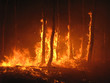 Leinwandbild Motiv Large flames of forest fire