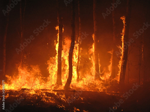 Large flames of forest fire - 24003771