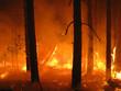 Leinwandbild Motiv Disaster with fire in the forest
