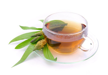 Tee Spitzwegerich - tea ribwort plantain 08