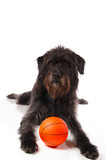 Shaggy dog with a basketball