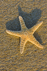 starfish in the sand