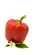 Red Bell Pepper with Leaves and Flower