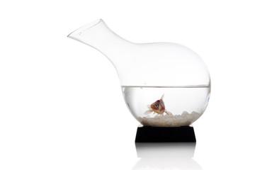 pesce rosso_003