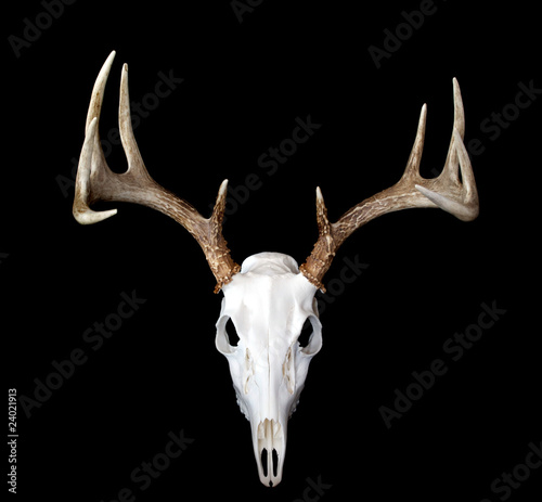 European Deer Mount Top View