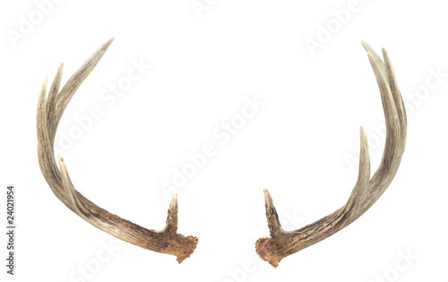 Foto op Aluminium Hert Rear View of Whitetail Deer Antlers