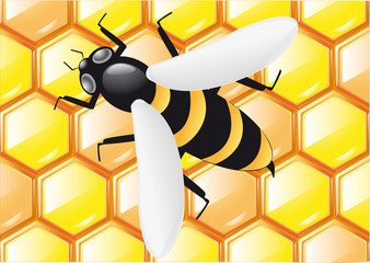 bee on honeycombs