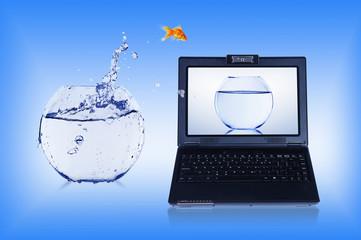 Goldfish and laptop