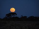 Mond im Outback Australiens