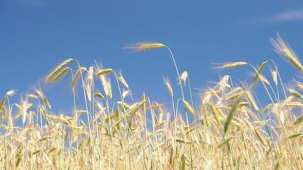 Ein Feld im Wind