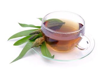 Tee Spitzwegerich - tea ribwort plantain 10