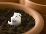 Roll of twenty pound notes growing in flowerpot