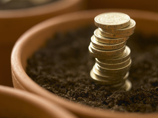 Close up of stack of pound coins growing in flowerpot