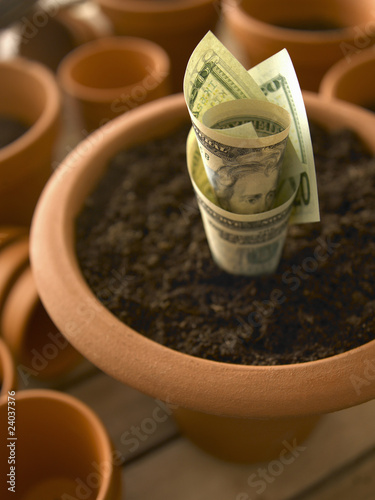 Roll of twenty dollar bills growing in flowerpot