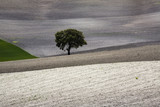 """Tree in farmland, Jodar, Andalucia, Spain"""