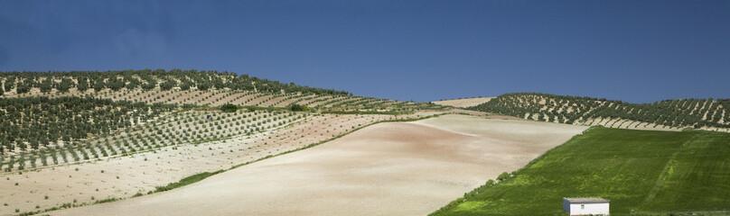 """""""Farmland, Sante Fe, Andalucia, Spain"""""""