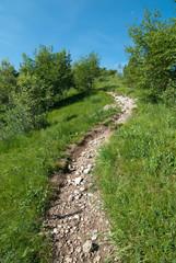sentiero sinuoso in salita