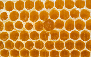 One honeycomb with drop of honey.