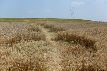 crop circle in Poirino (Turin, Italy)  from the ground