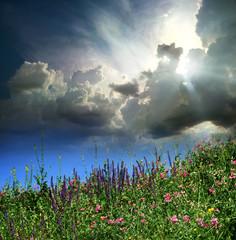 motley grass