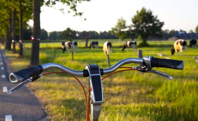 bicycle steer with cows on the background