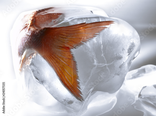 fish in ice