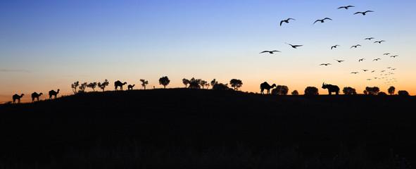 siluetas de animales en el horizonte