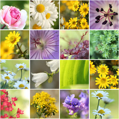 Collage Gartenblumen