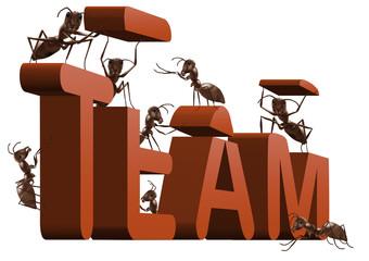ant teamwork team building cooperation