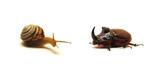 snail versus beetle poster