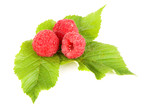 raspberries isolated on the white background