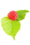 raspberry isolated on the white background