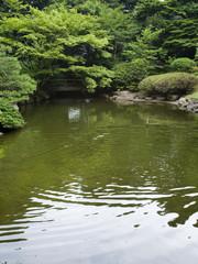 日本庭園と橋
