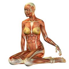Muskelstudie Frau sitzend