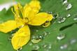 Fototapete Blume - Blatt - Blume