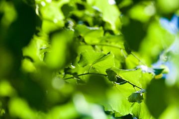 leaves on green