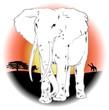 Elefante Africano nel Tramonto-African Elephant on Sunset