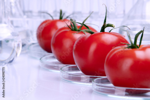 tomatoes in lab