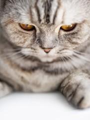 Close-up of a beautiful cat