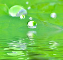 Wassertropfen auf grünem Blatt