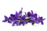 Violets - Fine Art prints