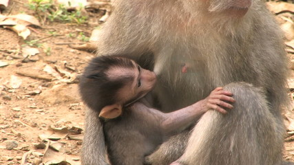 Monkey Baby Infant Nursing