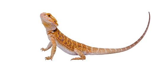 Full dragon portrait