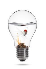pesce rosso nella lampadina