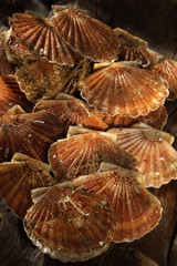 stall of scallops in their shells