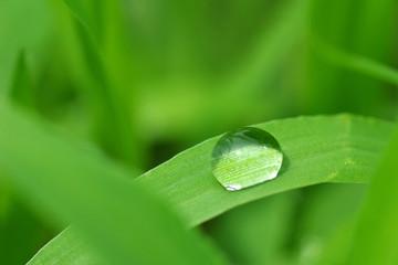草の上の水滴