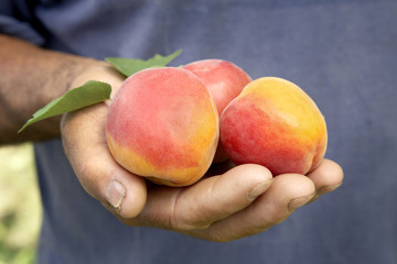 handful of fresh apricots