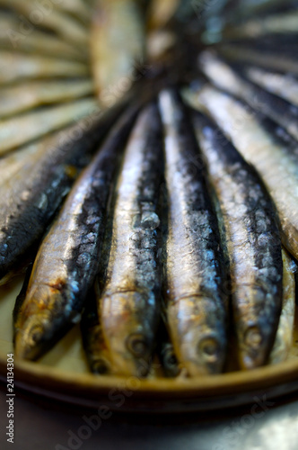 rosette of sardines in oil