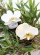 orchidée,bambou