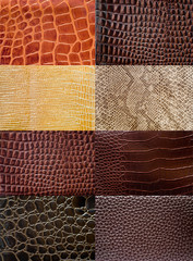 Colección de texturas de peil de reptil.